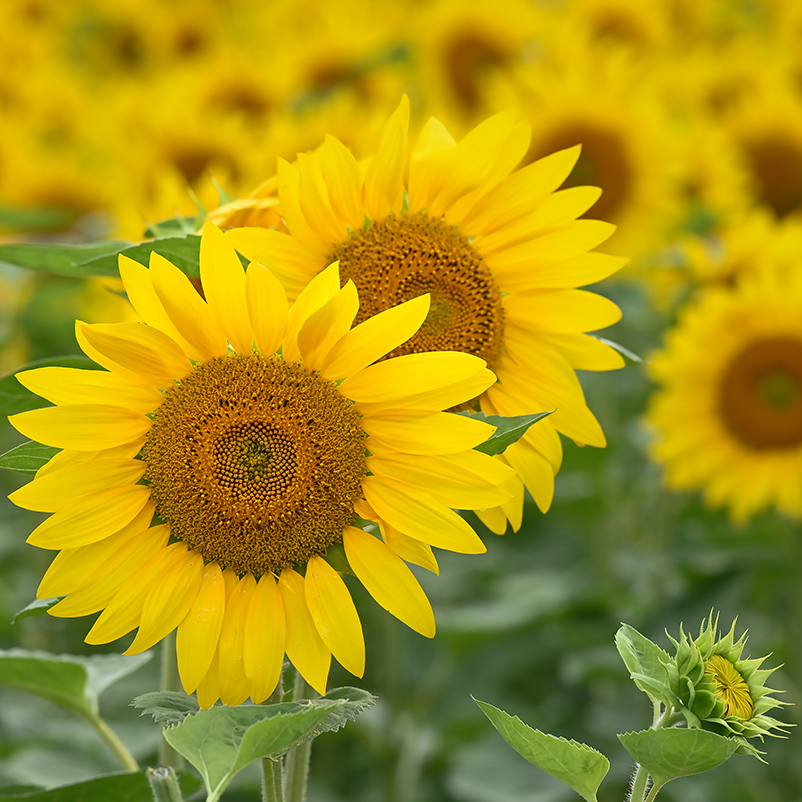 夏の花 03_f0099102_15231272.jpg