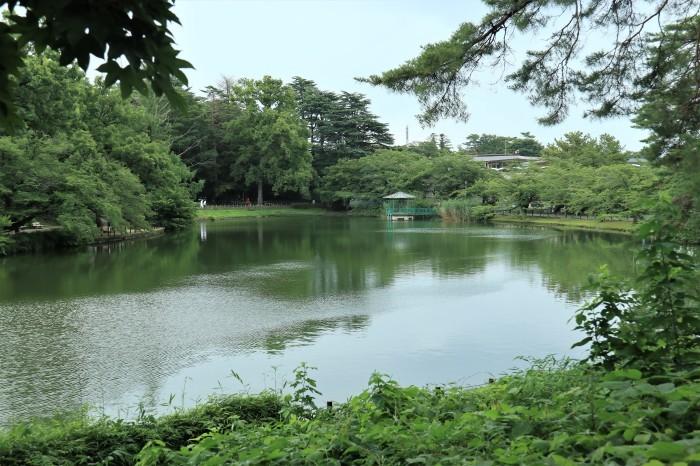 大宮公園の野鳥_d0150720_18315779.jpg
