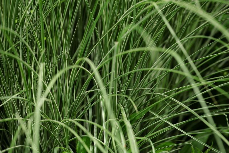 greenery works_e0169421_20494202.jpg