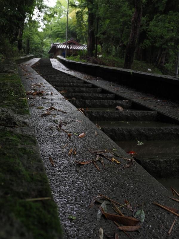 梅雨の風景 (2/2)_d0052327_16410353.jpg