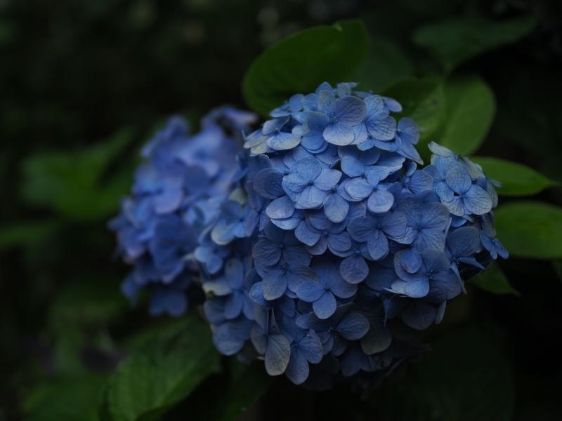 梅雨の風景 (2/2)_d0052327_16453872.jpg