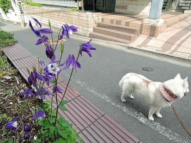 散歩屋日誌【45】_c0062832_15322085.jpg