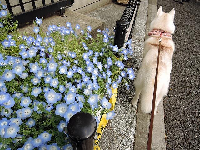 散歩屋日誌【45】_c0062832_15333113.jpg