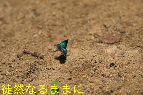 北海道遠征 ポイント②_d0285540_14241411.jpg