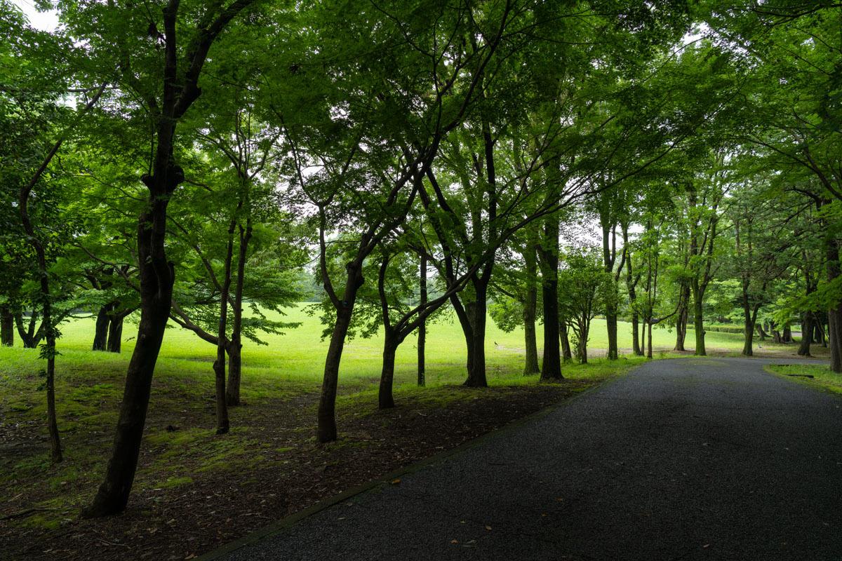 雨の森とキノコ_a0261169_16321055.jpg
