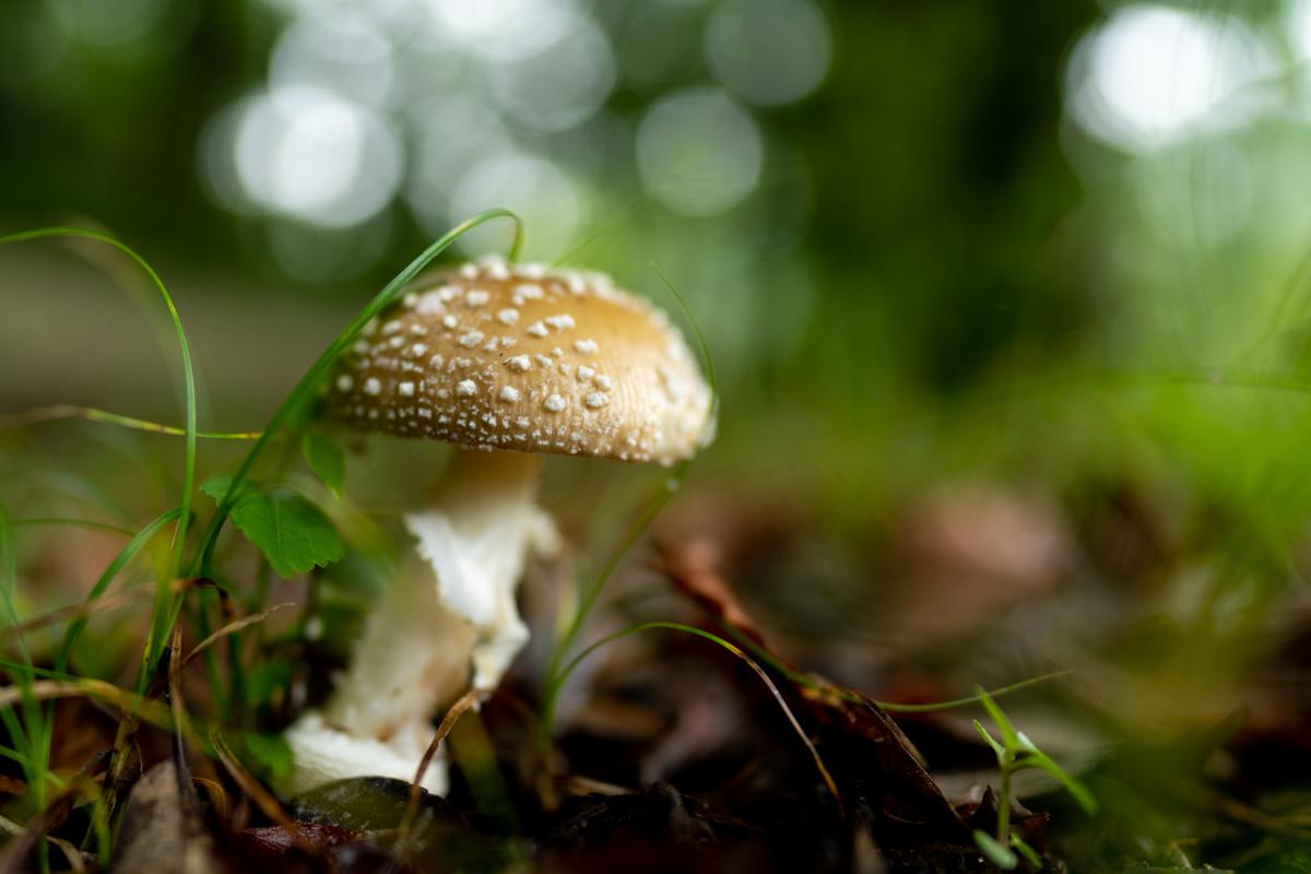 雨の森とキノコ_a0261169_16323598.jpg