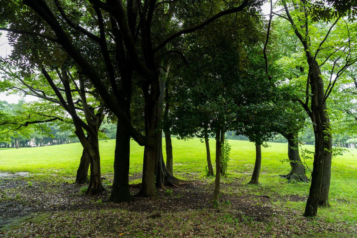 雨の森とキノコ_a0261169_16334562.jpg