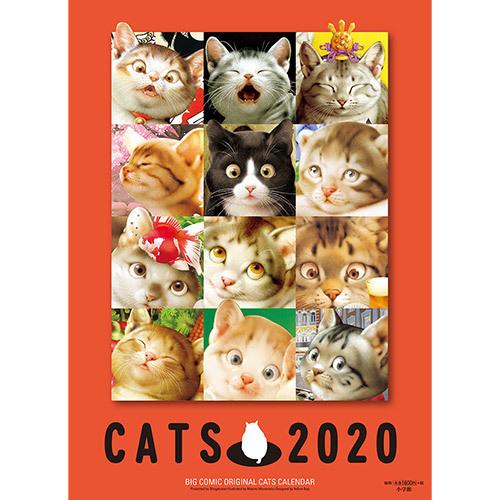《 村松 猫 2020 》_c0328479_11542933.jpg