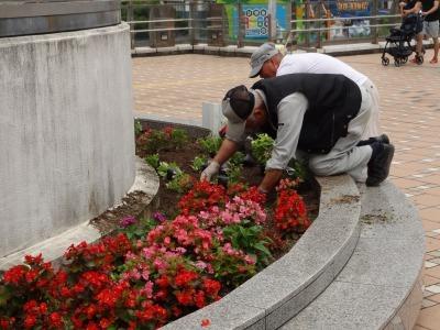名古屋港水族館前花壇の植栽R2.7.15_d0338682_15444812.jpg