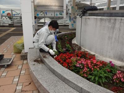名古屋港水族館前花壇の植栽R2.7.15_d0338682_15465013.jpg