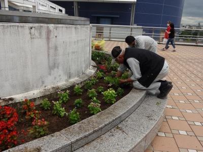 名古屋港水族館前花壇の植栽R2.7.15_d0338682_15472631.jpg