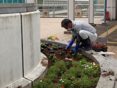 名古屋港水族館前花壇の植栽R2.7.15_d0338682_15474369.jpg