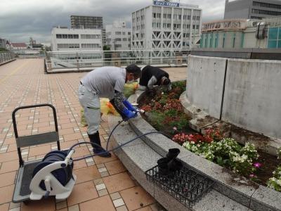 名古屋港水族館前花壇の植栽R2.7.15_d0338682_15491304.jpg