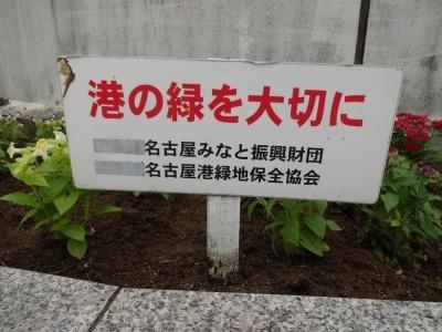 名古屋港水族館前花壇の植栽R2.7.15_d0338682_15504615.jpg