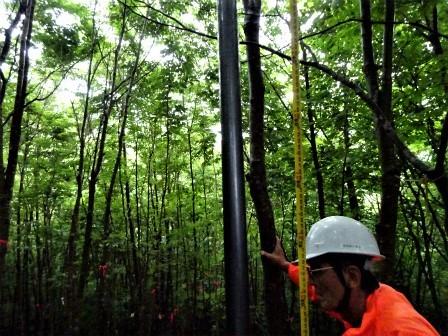 みんなの森活動日記_d0105723_07375751.jpg