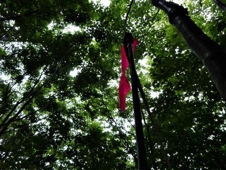 みんなの森活動日記_d0105723_07384960.jpg