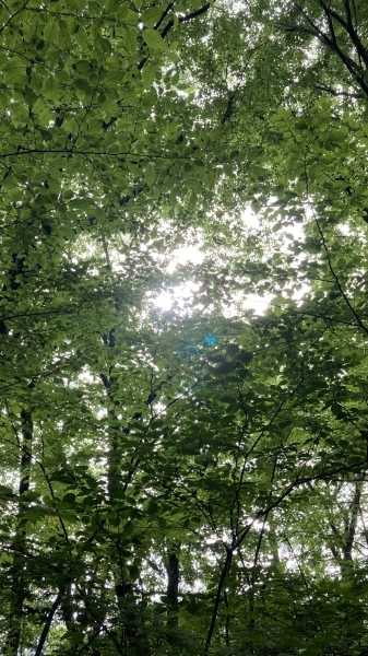 日々のコトの葉だより_b0174425_17364613.jpg