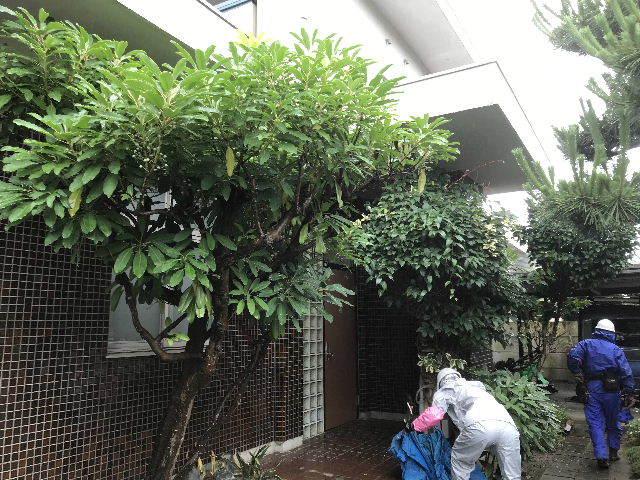 民間植木剪定・伐採_f0031037_19110777.jpg