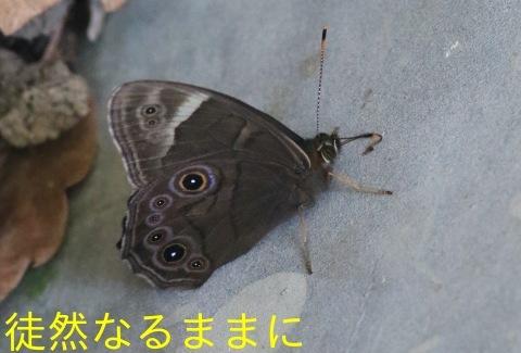 北海道遠征 ポイント②_d0285540_19225759.jpg