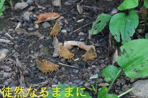 北海道遠征 ポイント④_d0285540_19412637.jpg