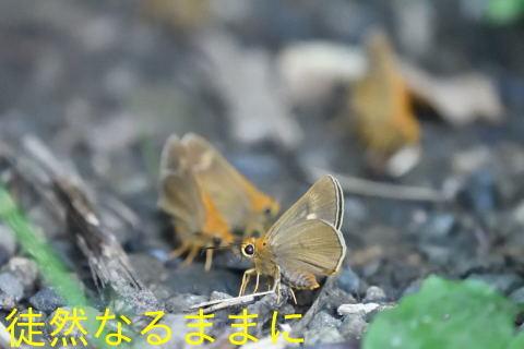 北海道遠征 ポイント④_d0285540_19444639.jpg