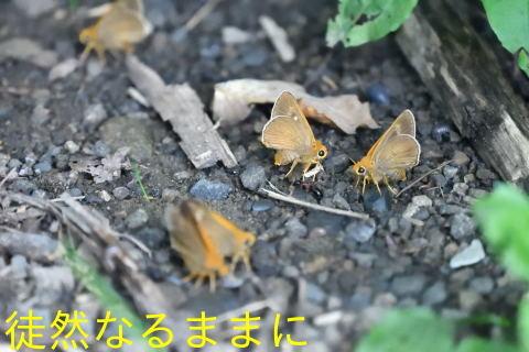 北海道遠征 ポイント④_d0285540_19445527.jpg
