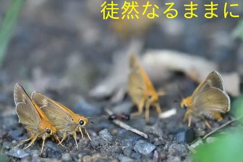 北海道遠征 ポイント④_d0285540_19465183.jpg