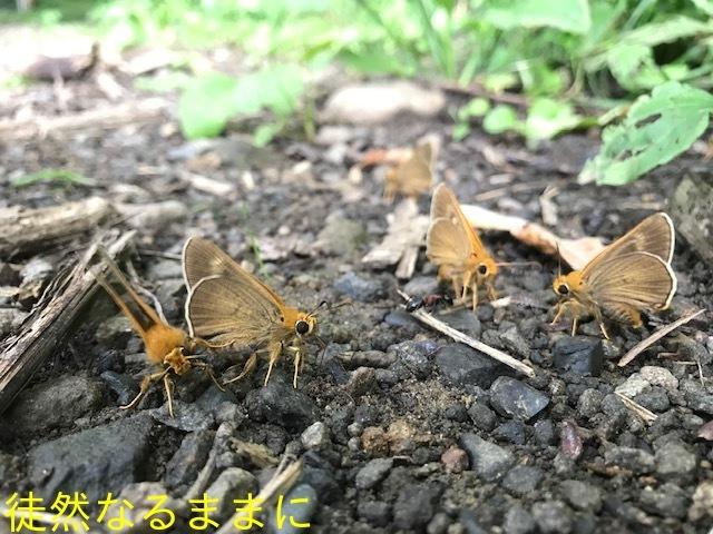 北海道遠征 ポイント④_d0285540_19514014.jpg