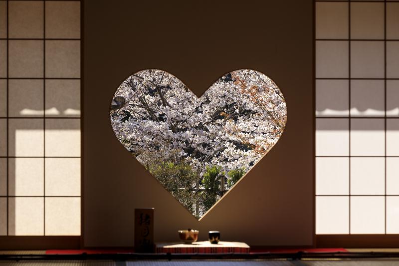 2020桜咲く京都 さくら咲く正壽院_f0155048_23313624.jpg