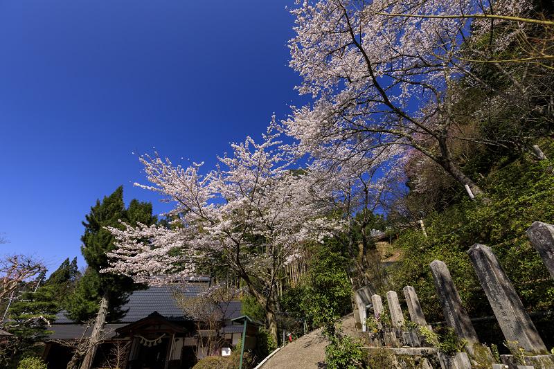 2020桜咲く京都 さくら咲く正壽院_f0155048_2331597.jpg