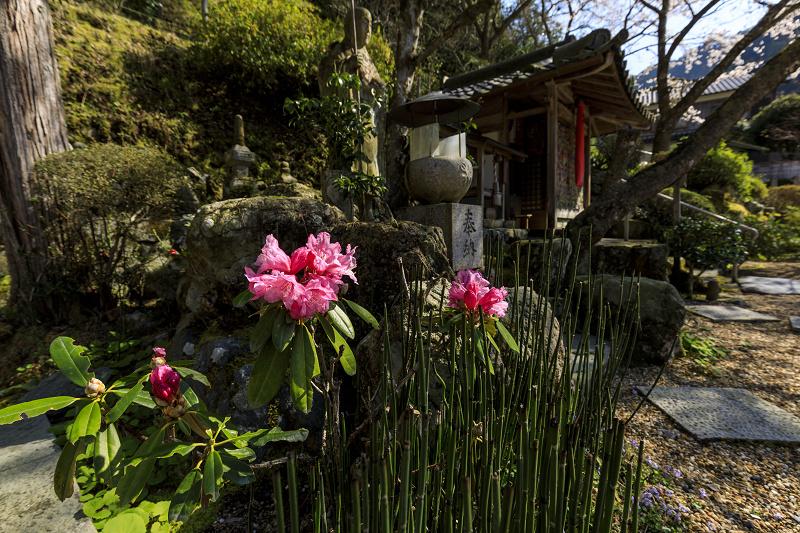 2020桜咲く京都 さくら咲く正壽院_f0155048_23322638.jpg