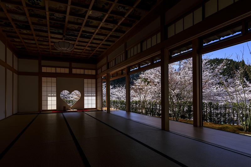 2020桜咲く京都 さくら咲く正壽院_f0155048_23325414.jpg