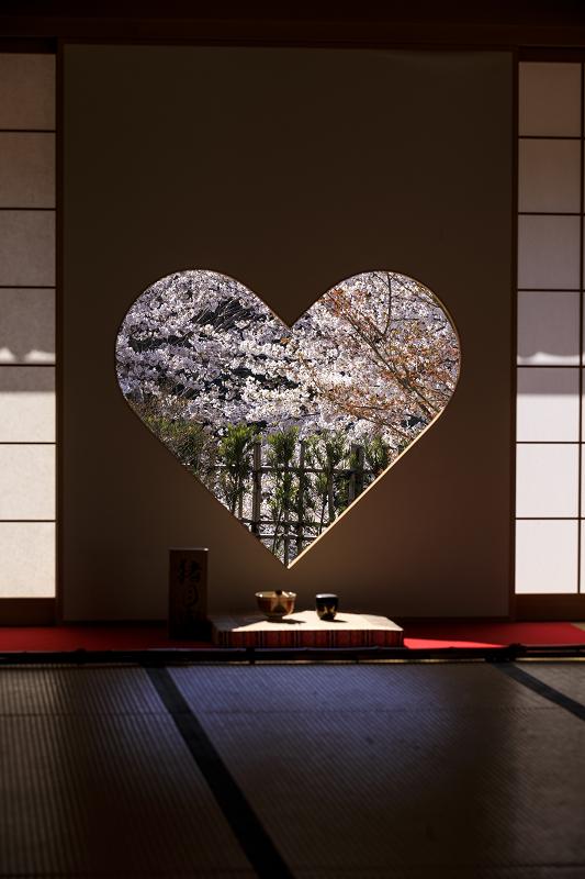 2020桜咲く京都 さくら咲く正壽院_f0155048_23325882.jpg