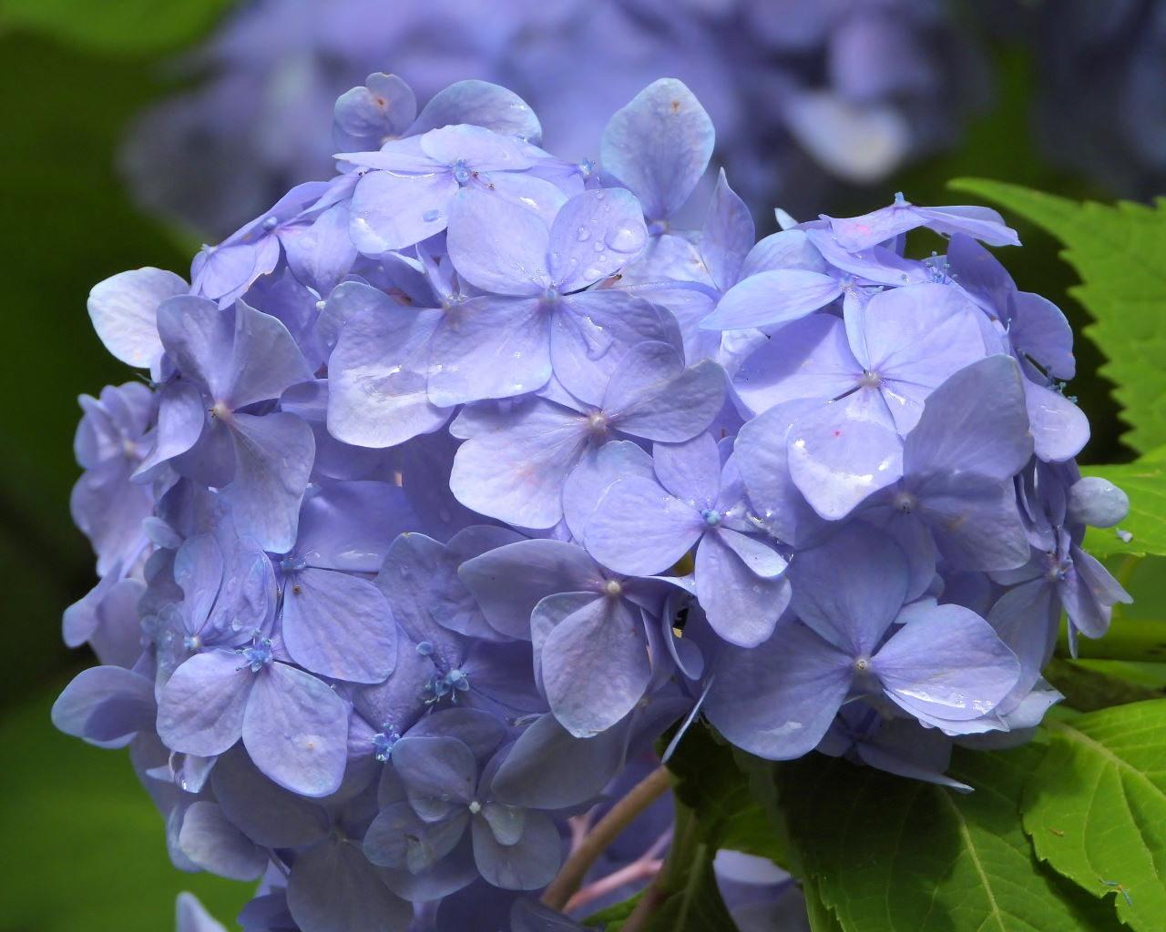 在庫から 染料植物園で雨上がりに_c0305565_17303961.jpg