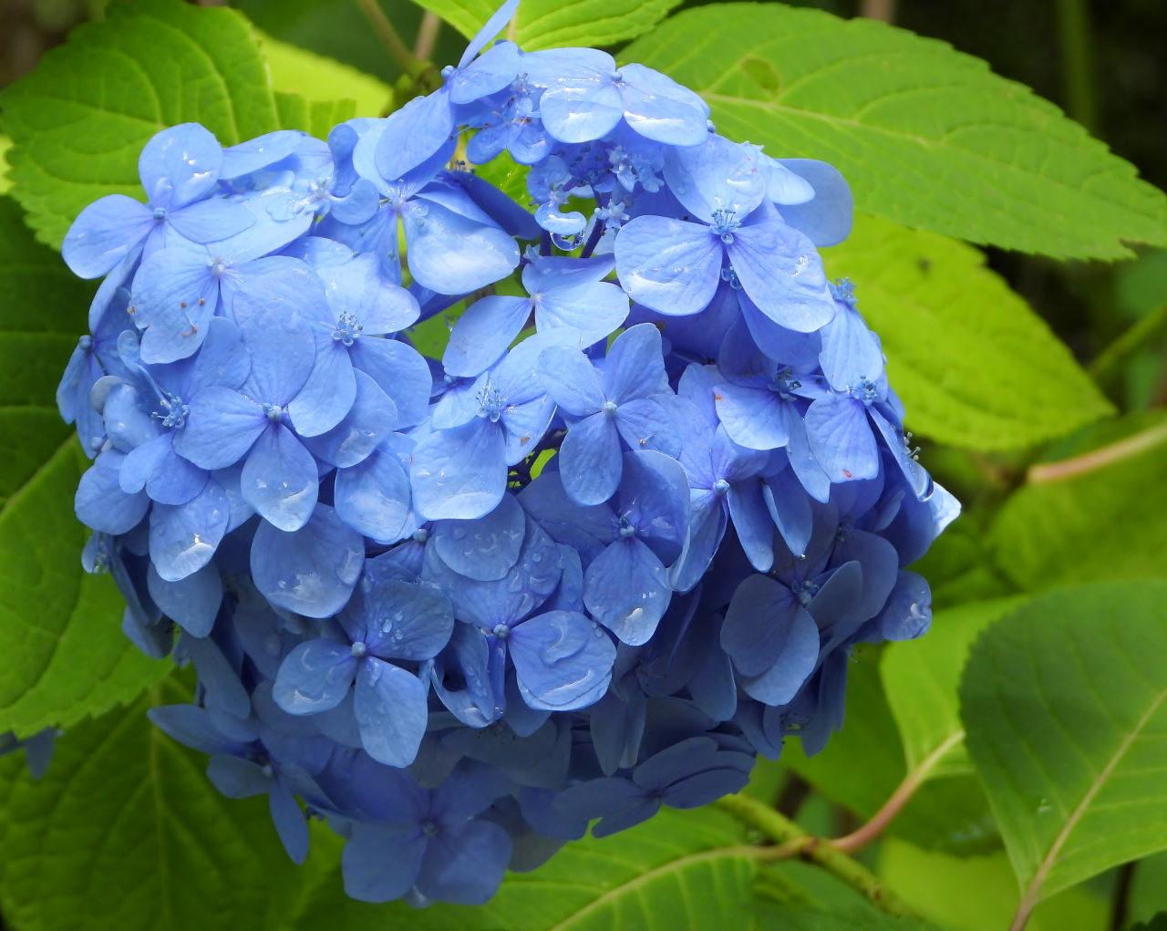 在庫から 染料植物園で雨上がりに_c0305565_17310451.jpg
