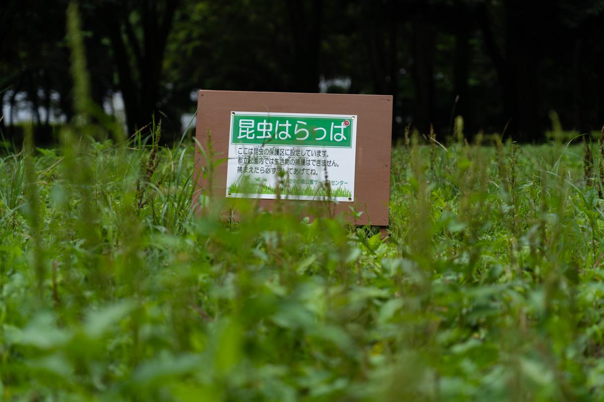 昆虫はらっぱ_a0261169_14274478.jpg