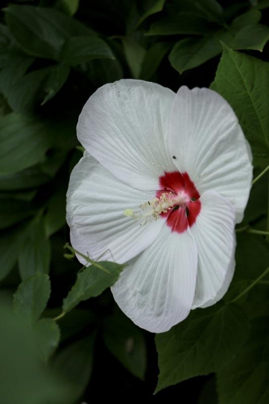 咲き出した夏の花〜_a0123003_14273394.jpeg