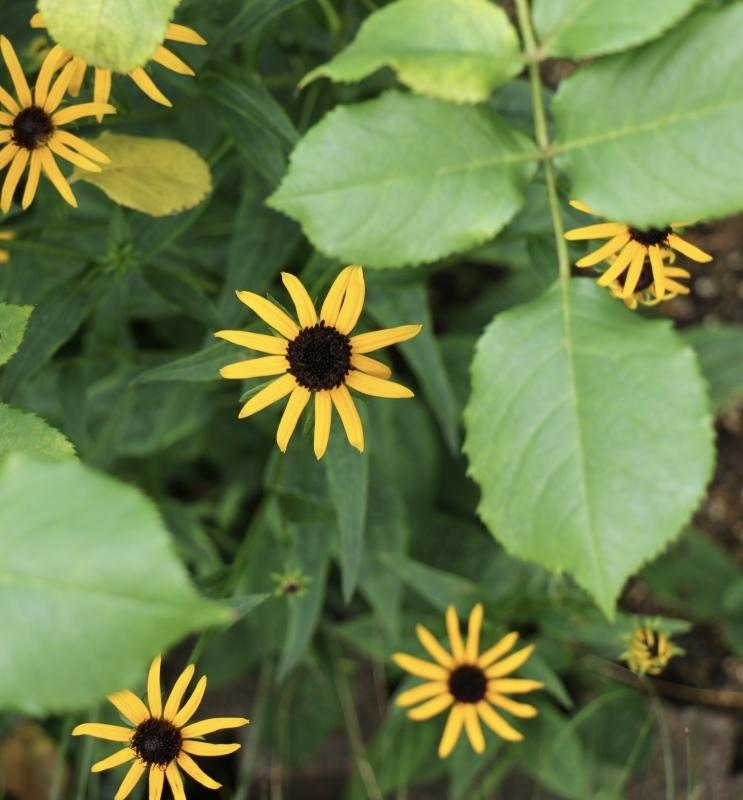 咲き出した夏の花〜_a0123003_14275838.jpeg