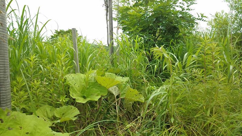 7月11日(土)当別22世紀の森 下草刈り_c0173813_19481092.jpg