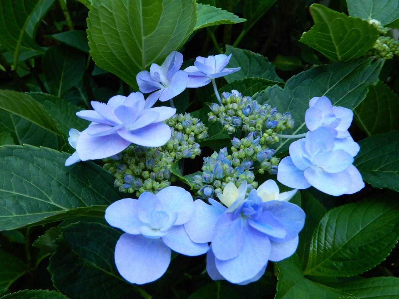 北海道らしい夏の一日_c0025115_22511793.jpg