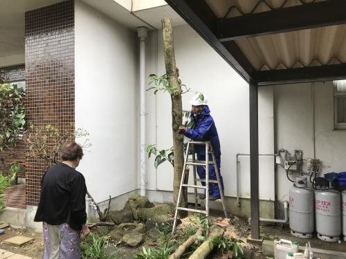 民間植木剪定伐採作業終了_f0031037_19161548.jpeg