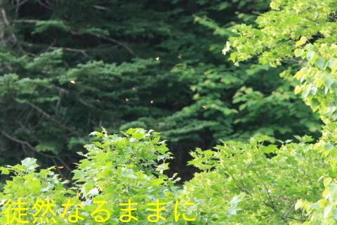 北海道遠征 ポイント③_d0285540_05380742.jpg