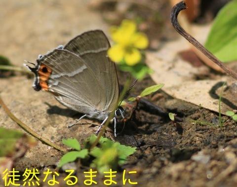 北海道遠征 ポイント⑤_d0285540_06252235.jpg