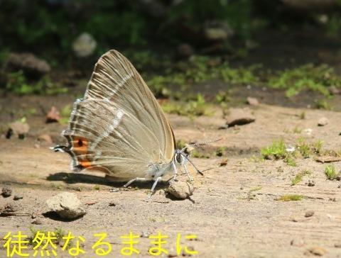 北海道遠征 ポイント⑤_d0285540_06252444.jpg