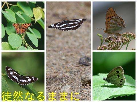 北海道遠征 ポイント⑤_d0285540_19422070.jpg