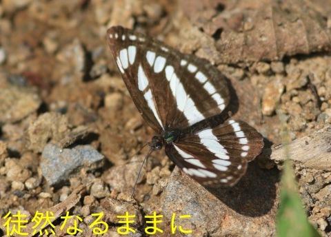 北海道遠征 ポイント⑤_d0285540_19424803.jpg