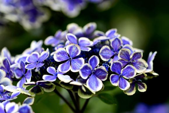 紫陽花(6)_c0093046_19040116.jpg