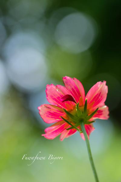久しぶりに晴れた日の花写真 **_d0344864_22111898.jpg
