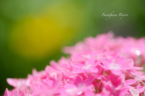 久しぶりに晴れた日の花写真 **_d0344864_22155360.jpg