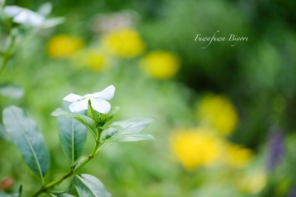 久しぶりに晴れた日の花写真 **_d0344864_22162166.jpg